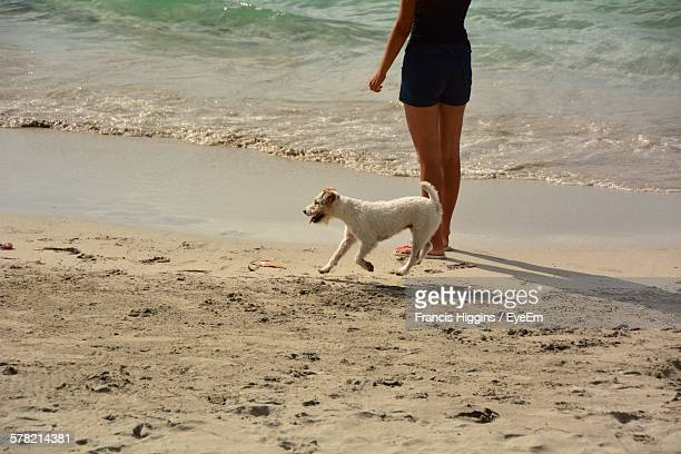 Low Section Of Woman Standing By Fox Terrier At Beach