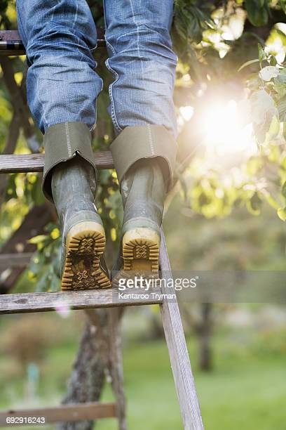 Low section of woman standing on ladder by tree in orchard