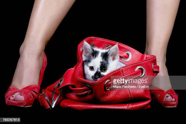 Low Section Of Woman With Cat Against Black Background