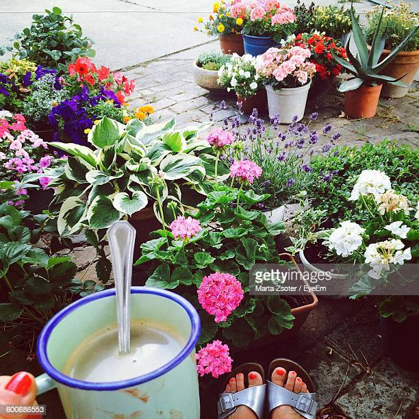Low Section Of Woman With Coffee In Yard