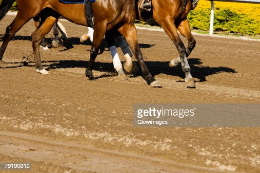 Low section view of a group of horses at the horseracing track : Foto de stock