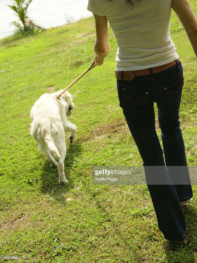 Low section view of a mid adult woman walking with a Labrador retriever : Stock Photo