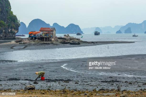 Low tide in halong bay (vietnam)