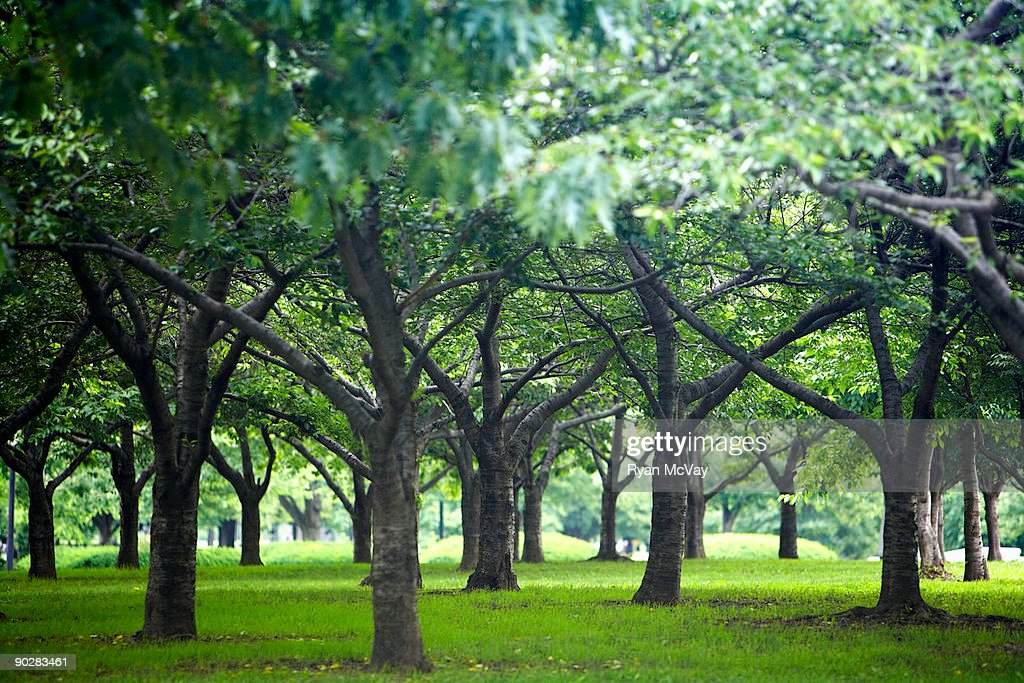 Low trees in Flushing Meadows-Corona Park : Stock Photo