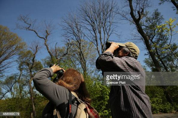 Lowell Taubman and his wife Robin look for birds during one of the best months for bird watching on May 7 2014 at Prospect Park in the Brooklyn...