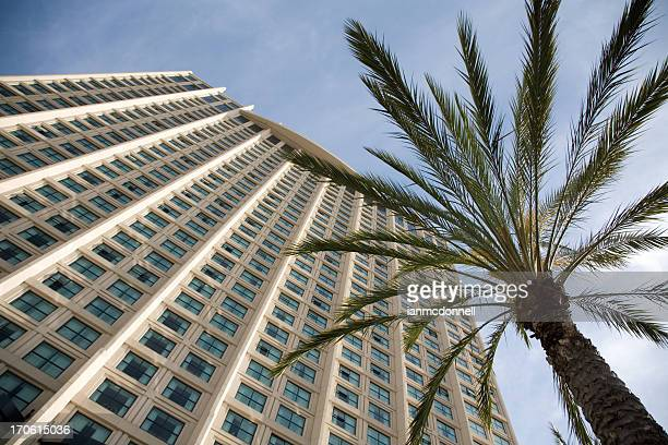 A lower angle shot of a palm tree by a building