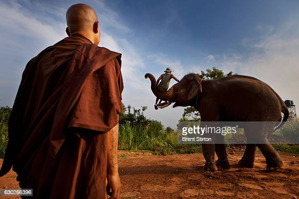 Luang Poo Bru Ba Dhammamunee head abbot of Wat Suan Paa Phutthasatharn Supraditme thee Temple photographed in Surin Elephant Village in Surin...