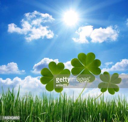 Lucky clovers and grass