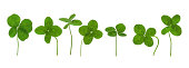Four Leaf clovers in a row. Isolated on white.