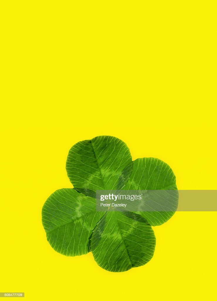 Lucky four leaf clover with copy space