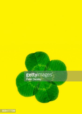 Lucky four leaf clover with copy space