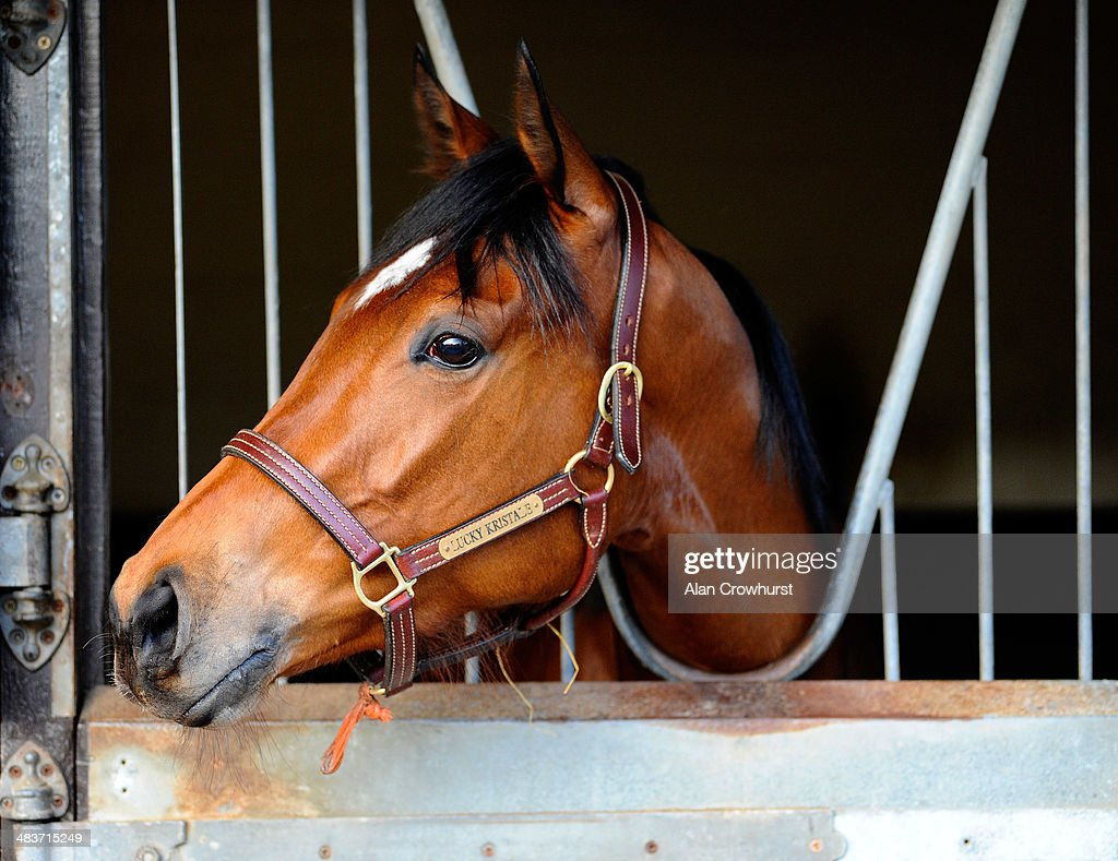 Lucky Kristale in her box at Graham Lodge Stables in Newmarket on April 10, 2014 in Lingfield, England.
