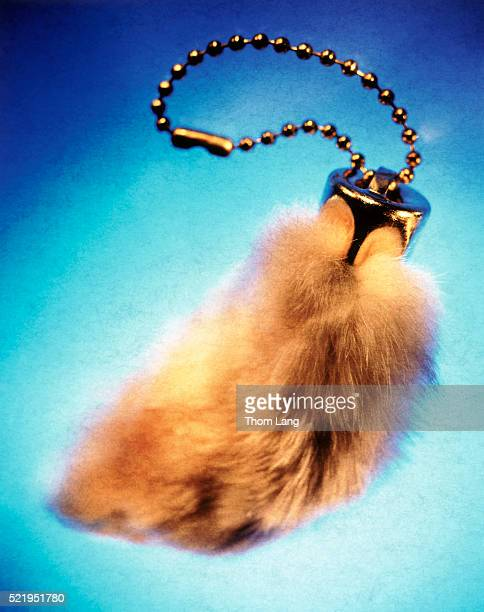 Lucky rabbits foot