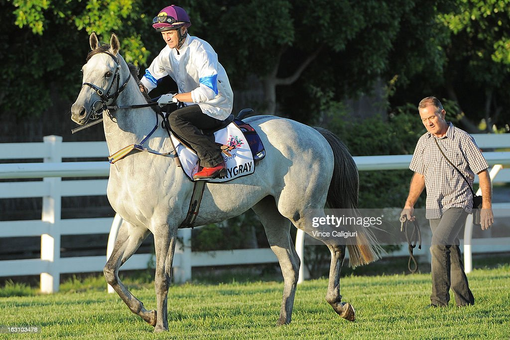 Luckygray heads to the barriers before his trial down the straight during a trackwork session at Flemington Racecourse on March 5, 2013 in Melbourne, Australia.