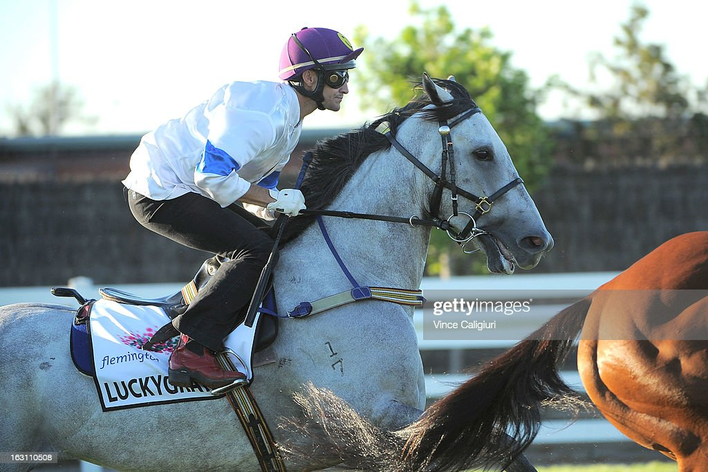 Luckygray jumps out of the gates in a barrier trial down the straight during a trackwork session at Flemington Racecourse on March 5, 2013 in Melbourne, Australia.