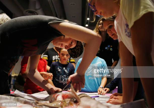 Lucy Minich of Scituate left cuts out the eye of a dogfish shark during a dissection led by female scientists as part of 'Shark Tales Women Making...
