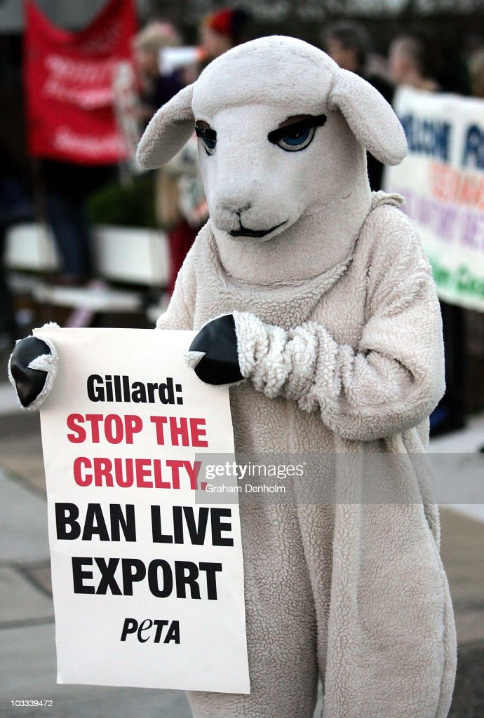 Lucy the 'sheep', a PETA supporter wearing a sheep costume, demonstrates outside a Julia Gillard and Tony Abbott town hall event on August 11, 2010 in Sydney, Australia. The demonstration was organised to call attention to the treatment of sheep by Australia's wool industry.