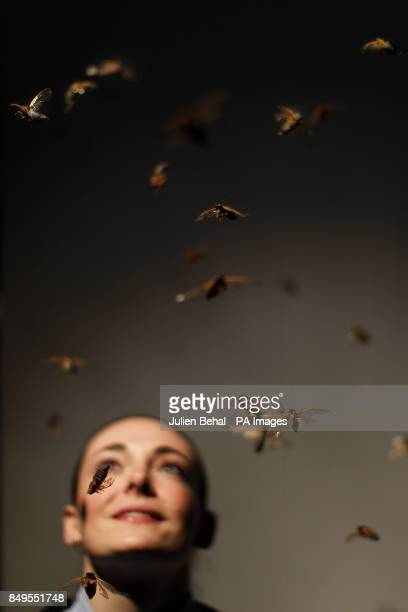 Lucy Whitaker looks at 'Magicicada' an installation at the Science Gallery in Trinty College Dublin which features Cicada insects and the sounds of...