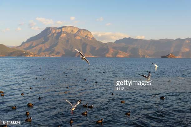 Lugu Lake,Lijiang,Yunnan Province,China