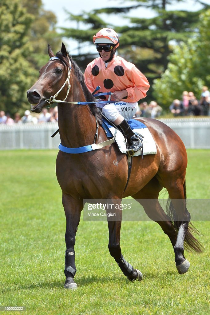 Luke Nolen riding Black Caviar heads out onto the track for an exhibition gallop in between races at Caulfield Racecourse on February 2, 2013 in Melbourne, Australia.