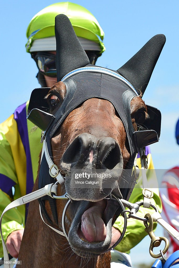<a gi-track='captionPersonalityLinkClicked' href=/galleries/search?phrase=Luke+Nolen&family=editorial&specificpeople=2190756 ng-click='$event.stopPropagation()'>Luke Nolen</a> riding Royal Haunt after winning the TROA Supports National Jockey's Trust Manfred Stakes during National Jockey's Trust Race Day at Caulfield Racecourse on February 2, 2013 in Melbourne, Australia.