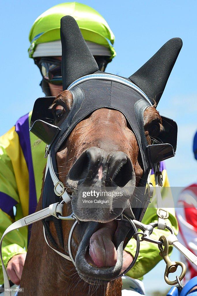 Luke Nolen riding Royal Haunt after winning the TROA Supports National Jockey's Trust Manfred Stakes during National Jockey's Trust Race Day at Caulfield Racecourse on February 2, 2013 in Melbourne, Australia.
