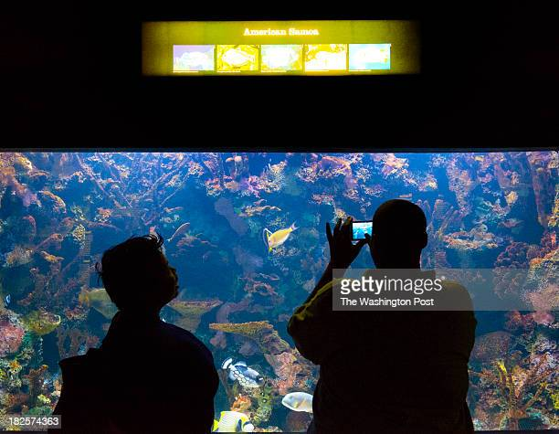 Lulu Bright and Marshall Williams Jr take pix of American Samoa fish at the last day of the National Aquarium's DC branch in Washington DC on...