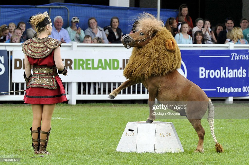Luma the Lion, who is a Shetland pony dressed as a Lion, performs during the Dublin Horse Show 2014 on August 9, 2014 in Dublin, Ireland.
