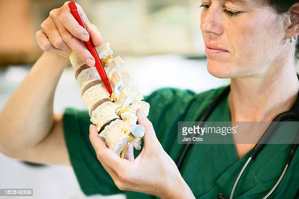 Lumbal spine