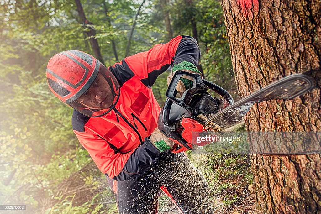 Lumberjack at work : Stock Photo