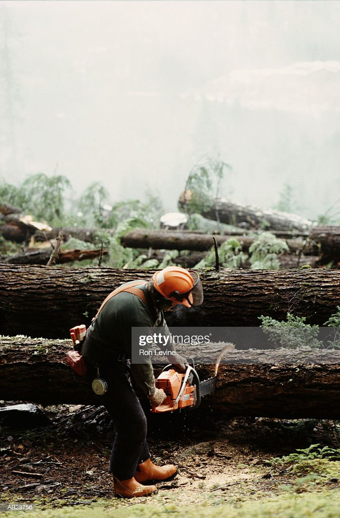 Lumberjack cutting felled trees with chainsaw, rear view : Stock Photo