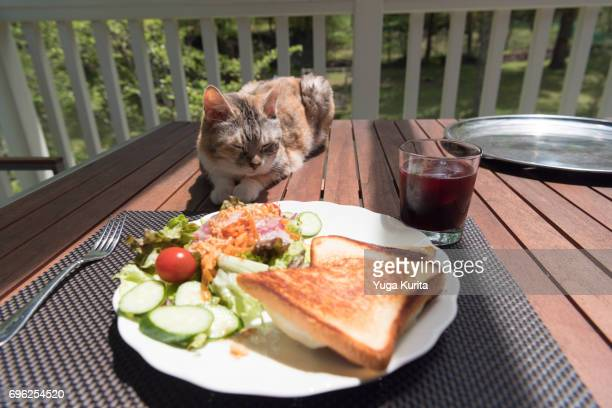 Lunch with a Cat
