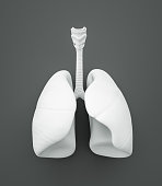 Lungs , on gray background , 3d render