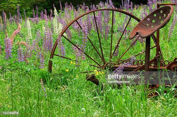 Lupine und Hay Rechen