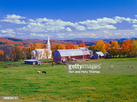 Lush autumn countryside in Vermont with grazing cows