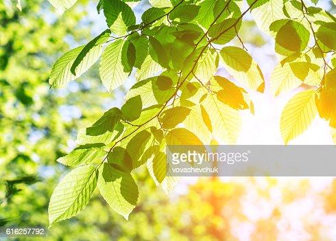 Exuberante bosque hojas : Foto de stock