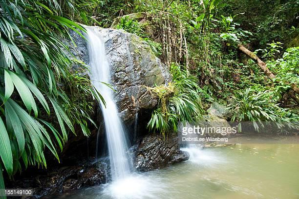 Lush Foliage at Waterfall