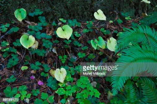Lush foliage : Stock Photo