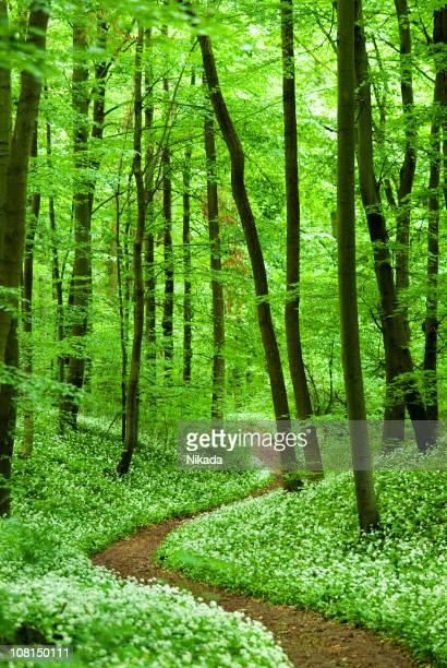 Exuberante bosque ruta