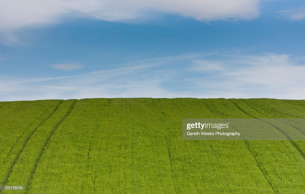 city and lush green fields Download 615 walkway lush green field stock photos for free or amazingly low rates new users enjoy 60% off 76,090,227 stock photos online.