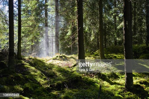 Lush green forest after rain-shower : Stock Photo