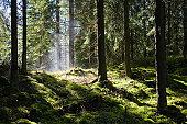 Lush green forest after rain-shower