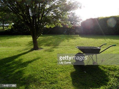Lush green garden with wheelbarrow and tree : Stock Photo