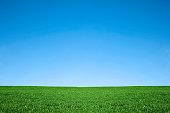 Lush green grass and cool blue sky background nature field  [url=http://www.istockphoto.com/search/lightbox/2336153t=_blank] [IMG]http://i165.photobucket.com/albums/u68/babyestella/HappyFamiliesAtHome