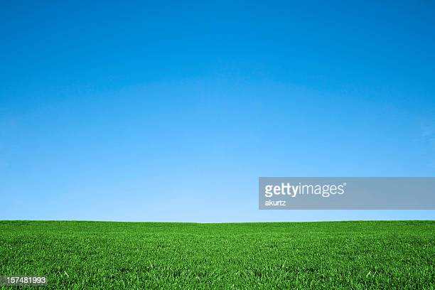 Lush green grass and cool blue sky background