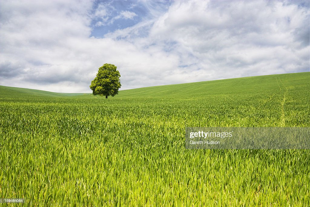 Lush Green Landscape Stock Photo Getty Images