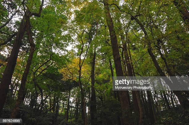 Lush green rain forest
