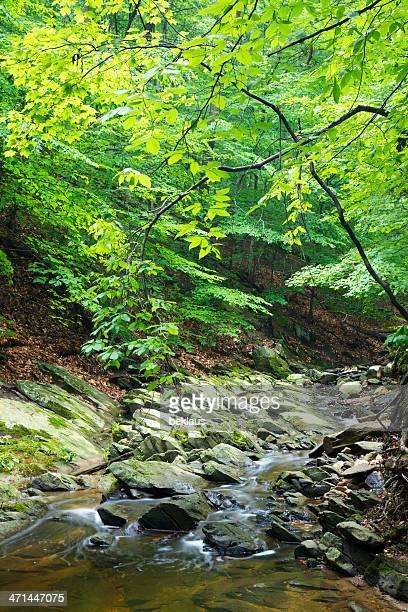 Lush, Green Stream in Virginia