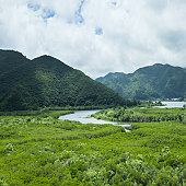 Lush mangrove swamp and forested mountains, Japan