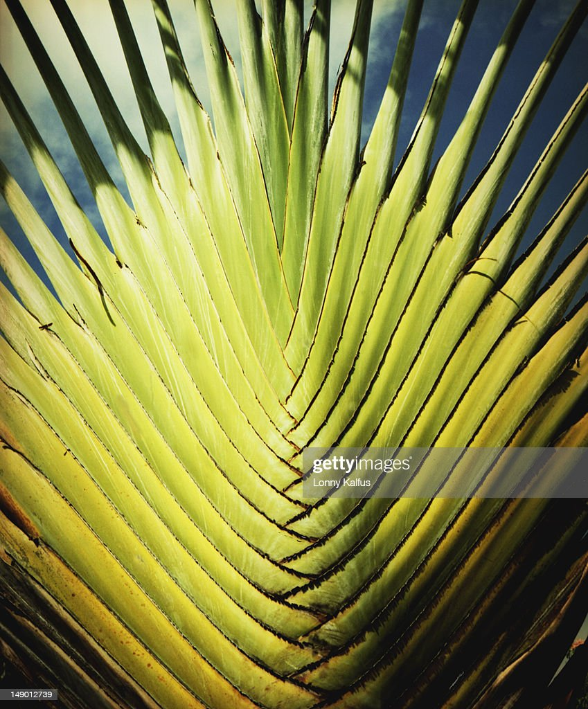 Lush vegetation of the Grenadines : Stock Photo